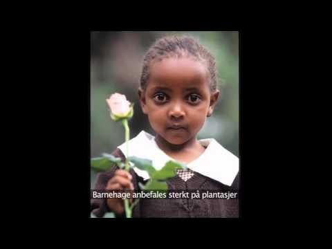 Fairtrade og barnearbeid
