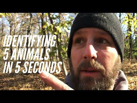 Identifying  5 Animals In 5 Seconds: A Wilderness Walk in New York