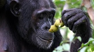 Why do we drink alcohol? The Drunken Monkey Argument