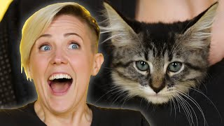 Hannah Hart Plays With Kittens While Answering Fan Questions