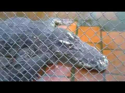 Suối Tiên: Tham quan Vương Quốc Cá Sấu