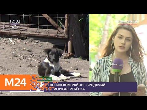 В Ногинском районе бродячий пес искусал ребенка - Москва 24 photo