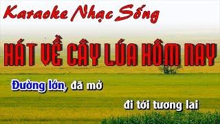 Hát Về Cây Lúa Hôm Nay - Karaoke Nhạc Sống - Beat chất lượng cao