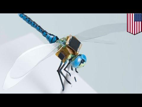 戴上電子背包 蜻蜓成監視器