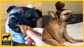 Wow!! Cute and Funny Dog and Cat Video. Feel the little Happiness!!
