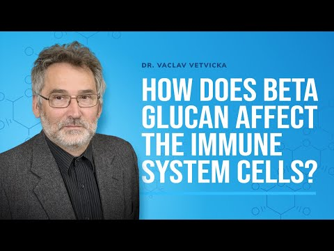 Dr Vetvicka Q&A 20: How does Beta Glucan affect the immune system cells?