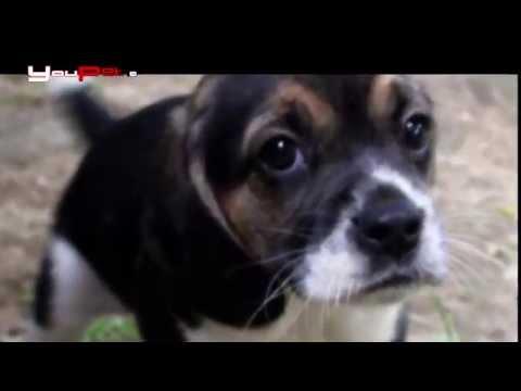 Una nuova vita inizia per i cani di Green Hill
