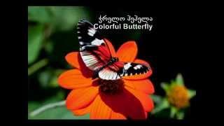 Zaza Korinteli & ZumbaLand - ჭრელო პეპელა - Colorful Butterfly