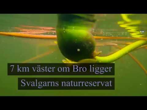 Under ytan: Svalgarns naturreservat