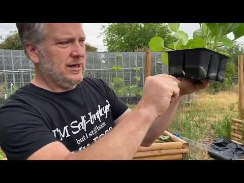 Planting Transplants with Dr. Earth 4-4-4 Fertilizer