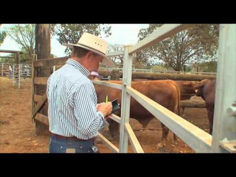 Brangus World Congress Beef Australia 2012