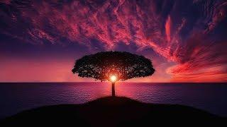 Beautiful Relaxing Music♫: Background Music, Sleep Music, Relaxing Music, Meditation Music