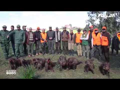 عملية إحاشة الخنزير البري بغابة ابن سليمان