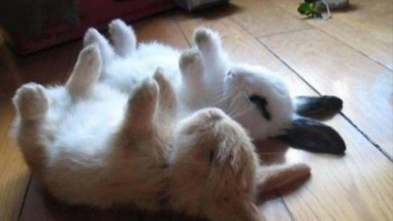 Really cute animals! - YouTube
