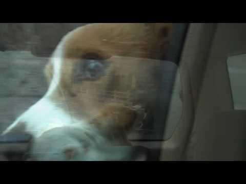 Puppy MUST Kill Evil Windshield Wiper