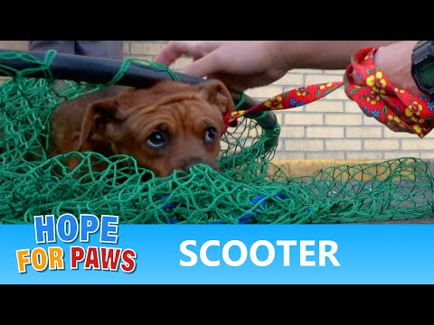 Scared homeless dog had big dreams - watch to see if they came true!