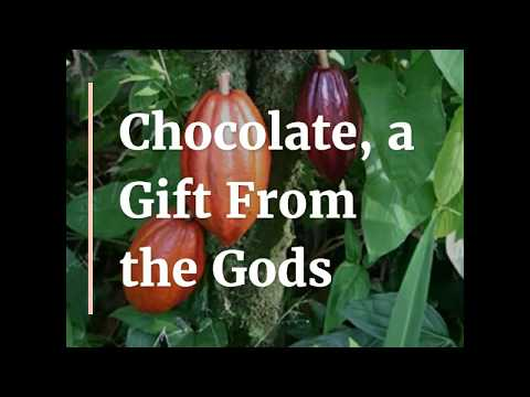 Chocolate, A Gift From The Gods