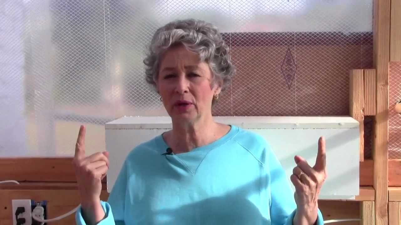 Phyllis Davis Explains Tilapia Fish that are Used in ...