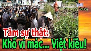 Tâm sự thật: Khổ vì mác... Việt kiều! - Donate Sharing
