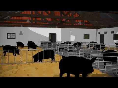 Märket Svenskt kött blir Kött från Sverige