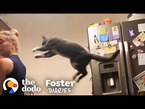 Woman Fosters A Shy, Scared Cat And ... 😍   The Dodo Foster Diaries