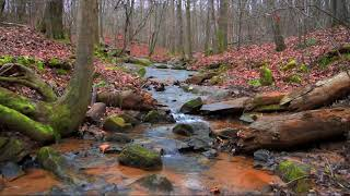 Relaxing 8 hour Forest Stream in the Fall
