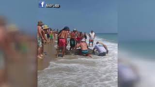 A second hammerhead shark caught on the Outer Banks