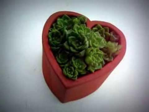 O meu amor é verde