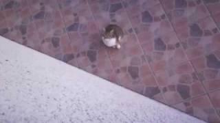 Chat et escalade