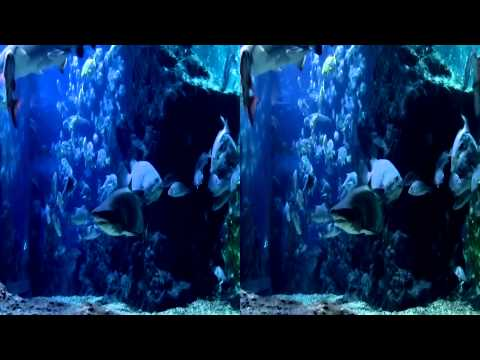 Shark Adventure in Thailand 3D Side by side Trailer