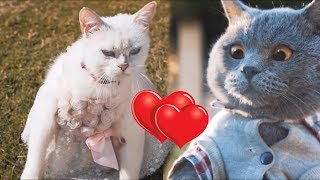Aaron's Animal's - Happy Valentine's Day Compilation! FunnyVines