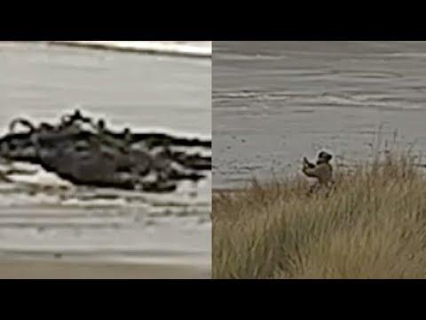 Restos de criatura misteriosa e gigantesca aparecem em praia; vídeo