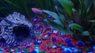Sleep Music | Fish Aquarium | Relaxation | Piano
