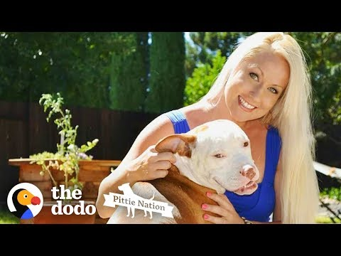 The Story of How a Pit Bull Changed His Mom's Life Forever | The Dodo Pittie Nation