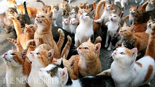 Why Humans Are Obsessed with Cats   Annals of Obsession   The New Yorker