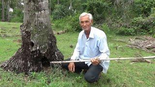 Sáu Cư bắt rắn độc trốn trong gốc cây dừa   Phóng sinh năm con rắn độc vào hoang mạc