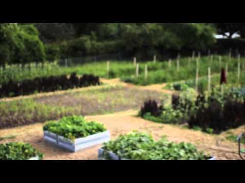 Växthusprojekt Skurup