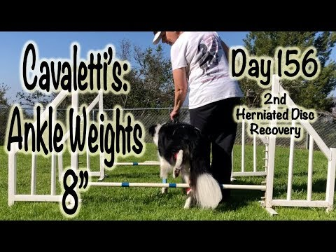 Day 156: Cavaletti's Ankle Weights 8