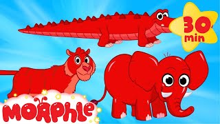 Cute Scary Animal Videos With Morphle  - My Pet Tiger, My Pet Crocodile, My Pet Elephant