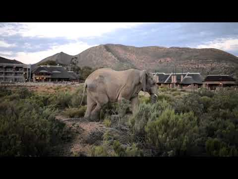 video 3 Day Luxury Aquila Private Game Reserve