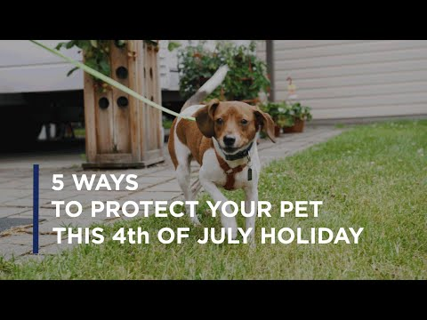1 in 3 pets will go missing in their lifetime. Use these tips from Petco Love Lost and Missing Animal Response Network's pet detective Kat Albrecht-Thiessen to keep your pets from getting lost this 4th of July.