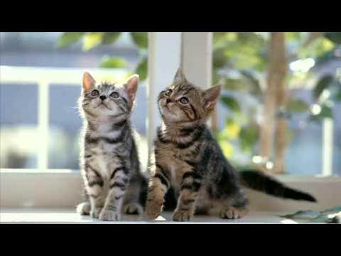OST Attic Cat - Come Back to Me - True Bird