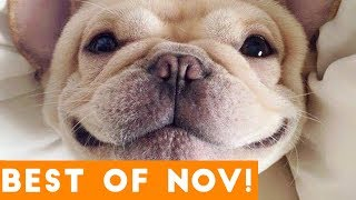 Funniest Pet Reactions & Bloopers of November 2017 | Funny Pet Videos - YouTube