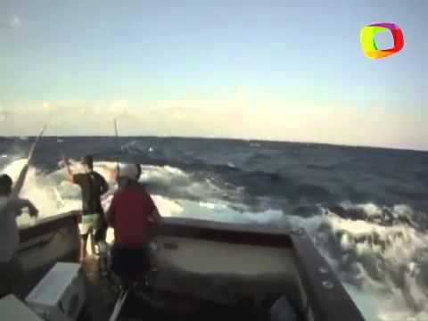 Peixe de 300 kg pula em barco e assusta pescadores; veja o vídeo