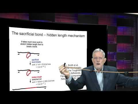 Sacrificial Bonds & Hidden Length