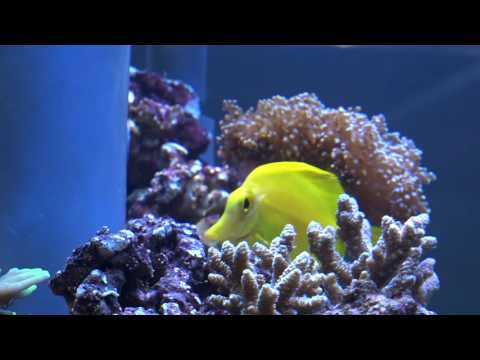 Mr. Saltwater Tank's Coverage of MACNA 2016 (Part 1)