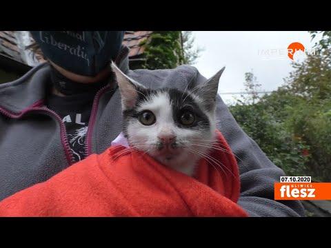 Flesz Gliwice / Domki dla kotów wolnożyjących
