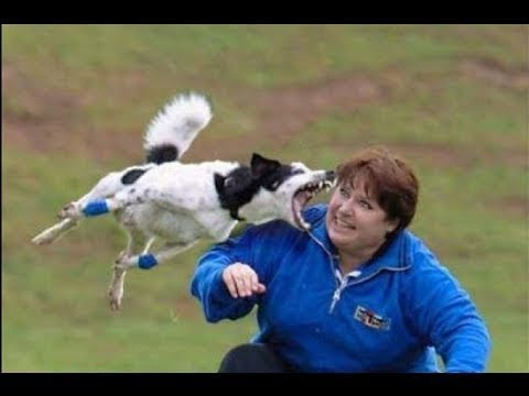 New Whatsapp Most Funny Videos 2017 | Latest Whatsapp Best Video All Time | Try Not to Laugh