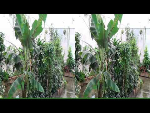 Sony HDR-TD10E Test Video 3D/PowerDirector 10 (yt3d)