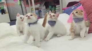 Chú Mèo Con ♥ Rửa Mặt Như Mèo ♫♫♫ Nhạc Thiếu Nhi Vui Nhộn Sôi động